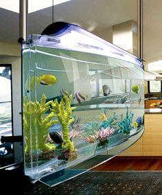 1000 images about crazy fish tanks on pinterest for Spacearium aquariums