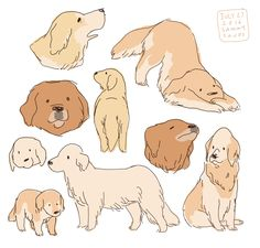 """Golden Retriever hamotzi: """" some golden retrievers! """" - Tap the pin for the most adorable pawtastic fur baby apparel! You'll love the dog clothes and cat clothes! Cute Animal Drawings, Animal Sketches, Cute Drawings, Drawing Animals, Drawings Of Dogs, Art And Illustration, Animal Illustrations, Dibujos Cute, Poses References"""