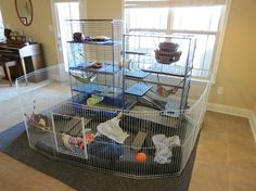 Indoor ferret enclosure :: i would want to put about four cages together instead, but this is a sweet idea. :]Indoor ferret enclosure :: i would want to put about four cages together instead, but this is a sweet idea. Chinchillas, Ferrets Care, Baby Ferrets, Cute Ferrets, Hamsters, Rodents, Ferret Playpen, Ferret Toys, Pet Ferret