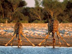 Animales Sorprendentes por Naturaleza Sorprendente