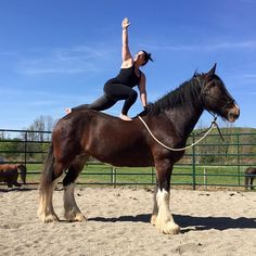 Pin for Later: This Awkward Horseback Yoga Trend Is Actually Quite Amazing Twisting Lunge