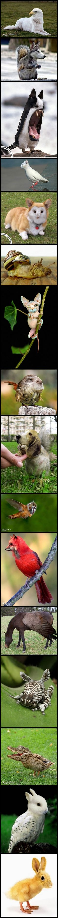 best perfect images on pinterest beautiful people doggies and
