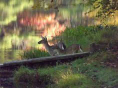 pocahontas state park | Watoga State Park Reviews - Marlinton, WV Attractions - TripAdvisor