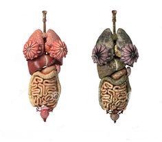 Un Week-end de Detoxifiere - Elimina Otravurile din Organism in 48 de Ore | Secretele
