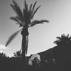 Sometimes you just need to take a break and sit back to appreciate everything you go through on a daily basis.  #oasis #palmsprings #desert #peace #photooftheday #instacool #palmtrees #holiday #trip