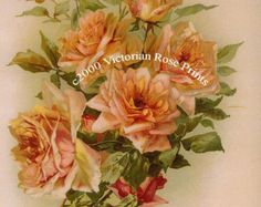PRINT FREE SHIP Best Victorian Pink Roses by VictorianRosePrints
