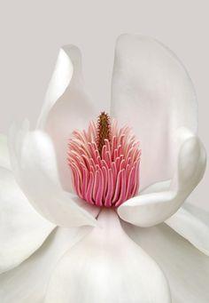 Gorgeous petals #flower #photos
