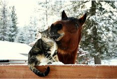 Cute cat and horse friendship