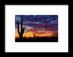 Red Hot Saguaro Sunset  Framed Print By Saija  Lehtonen