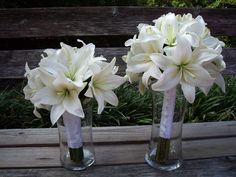 White Asiatic Lily | not as pointed as star-gazer or oriental lilies, softer edges, pale green center