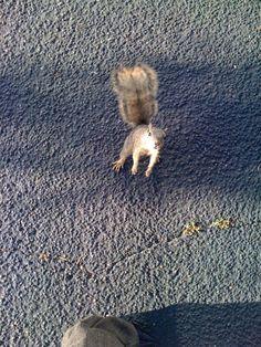 Squirrels on campus