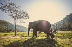 6 environmental challenges facing Southeast Asia (and what you can do) Matador Thai Travel, Solo Travel, Travel Wallpaper, Hd Wallpaper, Adventure Tours, Adventure Travel, Bangkok Itinerary, Environmental Challenges, Environmental Issues
