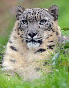 #alert #tiger
