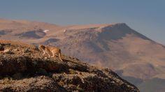 Patagonia Puma Tracking - New EcoCamp Patagonia Video