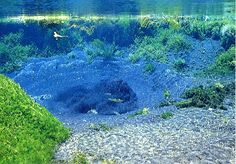 directly purified under Mt. Fuji one of the purest and clearest water in the world. Political Pictures, Spring Forest, Nature Water, Crystal Clear Water, Underwater World, What A Wonderful World, Great View, Nature Pictures, Japan Travel