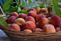 via-organica-em-garibaldi_frutas_viajando-bem-e-barato
