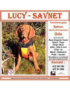 SAVNET: Treschowsgate , Bjølsen i Oslo ( 12.11.15) kl 07.. Observert i Torshovsparken kl ca 10:45.. NAVN: Lucy.. RASE: Ungarsk Viszla.. KJØNN: Tispe.. ALDER: Valp, 6 måneder.. FARGE: Brun.. CHIP: Ja.. BÅND: Halsbånd.. POLITI/ VIKING: Varslet.. NB !!: Lucy ble påkjørt av en sykkelist kan være skadet. KONTAKT: Cornelia - 412 56 700, Henning - 472 91 990.. HJERTEkontakt: Lucia 992 68 386 og Anne B 920 20 142.. (Sak opprettet dato 12.11.15 kl 12:00 ved Lucia )