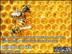 Stay humble brothers and sisters. #islam #quran Quran Category of my Islamic Quotes Pictures & Images - Islam Our Deen