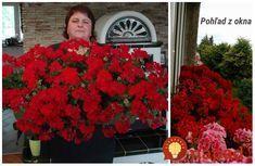 To je nápad! Plants, Garden, Bulb, Garden Decor, Geraniums