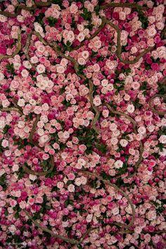 Gold Wallpaper Background, Flower Iphone Wallpaper, Rose Gold Wallpaper, Flower Backgrounds, Wallpaper Backgrounds, Wallpaper Wedding, Nature Aesthetic, Flower Aesthetic, Flower Wall Wedding