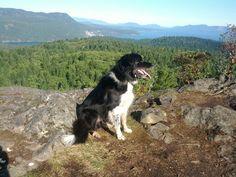 Mt. Wells Wells, Hiking, Dogs, Animals, Walks, Animais, Animales, Animaux, Pet Dogs