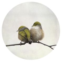 Nestle by Nathan Secker. 2 little New Zealand SIlver-Eyes (Tauhou) huddle together to keep warm. New Zealand Art, Nz Art, Birds And The Bees, Wall Art For Sale, Local Artists, Paintings For Sale, Spirit Animal, Beautiful Birds, Animals And Pets