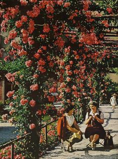 Knitters gather for the post-siesta hour in Trieste, Italy National Geographic Retro Signage, Trieste, Vintage Italian, National Geographic Photos, Vintage Colors, Vintage Travel, Beautiful Pictures, Italy, Nature