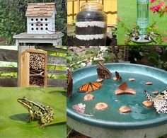 10 Cool Ways To Attract Endless Wildlife To Your Backyard!