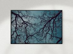 Items similar to Printable Forest Photography, Oak Tree Tops on Etsy Palm Tree Drawing, Photo Arrangement, Forest Tattoos, Celtic Tree Of Life, Forest Photography, Family Tree Wall, Tree Forest, Tree Tops, Tree Print