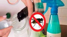 Éliminez jusqu'à la dernière mouche de votre maison avec cette ASTUCE NATURELLE, Puissante et Efficace !
