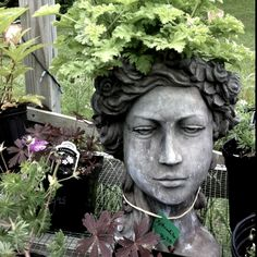 *Aphrodite head from Idyllwild Garden - she has a scented geranium growing from her :)