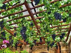 Γιάννης Αργυρός Σαντορίνη: Πως Μπολιάζω! Μπόλιασμα καρποφόρων δέντρων... Garden Bridge, Feng Shui, Ladder Decor, Pergola, Waterfall, Outdoor Structures, Nature, Flowers, Plants