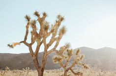 "100 Likes, 4 Comments - Steph   The Salty Renegade (@stephjianni) on Instagram: ""Morning views  . . . . . #travel #traveler #worldtraveler #getlost #wander #travelblog…"""