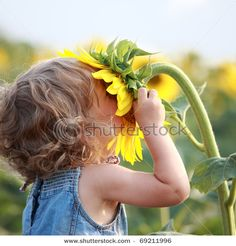 Cute Child With Sunflower In Summer Field Stock Photo 69211996 : Shutterstock