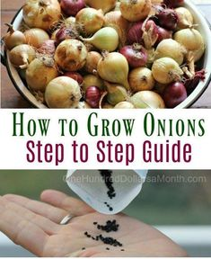 How to Grow Onions from Start to Finish #Vegetable_Gardening