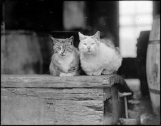Cats In History, 1917-1934