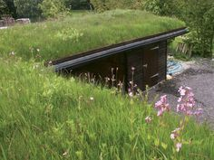 Meadow Mix Green Roof System.jpg 640×480 pixels
