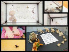 Krásne fotky pani Majky, ktoré vytvorila so svojimi deťmi - vývoj od žubrienky až po maličkú žabku.
