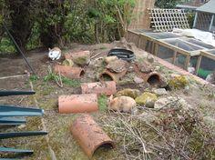 Instant Bunny Playground! - Rabbits United Forum