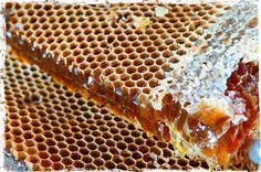 How to Harvest Honey from Natural Comb