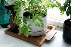 Kirppisrakkautta Flower Pots, Flowers, Planter Pots, Flower Vases, Plant Pots, Planters, Royal Icing Flowers, Flower, Florals