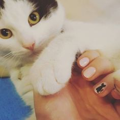 #Friday calls for furry friends and #catnails! Photo by @versilliaa. by nailitmag
