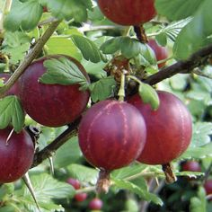 Image result for fruits plants