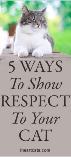 5 Ways To Show Respect To Your Cat