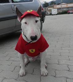 Ferrari Fan waiting for a ride in a Ferrari.