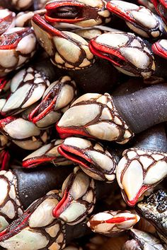 Percebes! One of my favorite foods in the world! If in Spain or Portugal, you must try them!  They look a bit scary but if you like clams and oysters you will love these...