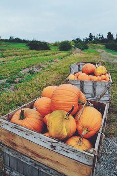 fall adventures   pumpkins