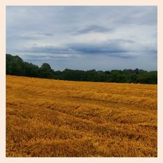 Bright yellow field of cut hay in Plumpton, Sussex..