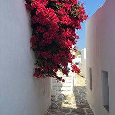 Peaceful vibes in Sikinos island (Σίκινος)☀️