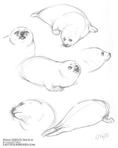 Lindsay Cibos' Art Blog: Daily Animal Sketch - Arctic Bundle